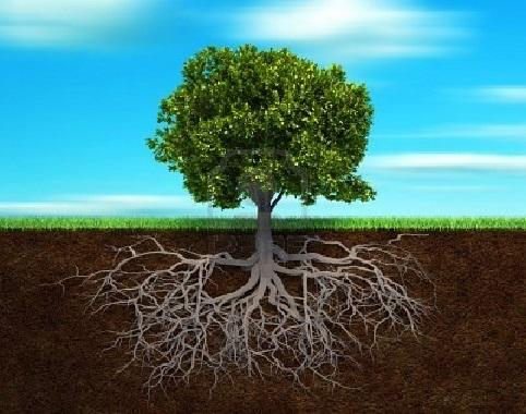 Risultati immagini per alberi immagini radici