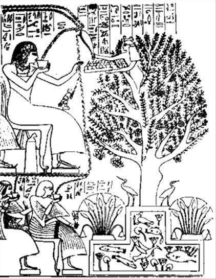 BibitaEgiziana
