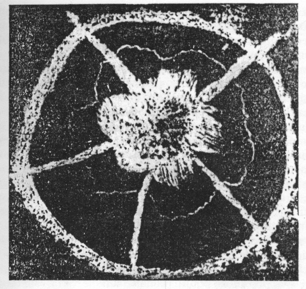 atomomagnetico2